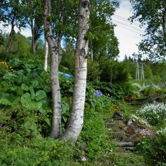 0125 Straumfjorden