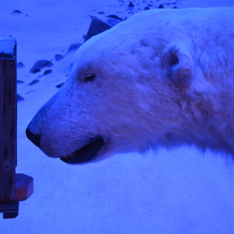 0154 Polarmuseet i Tromsø