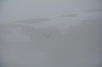 0227 Fjelljo