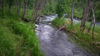 0273 Rohkunborri nasjonalpark
