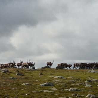 0586 Børgefjell