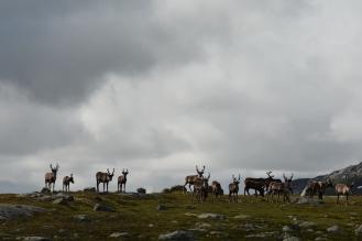 0587 Børgefjell