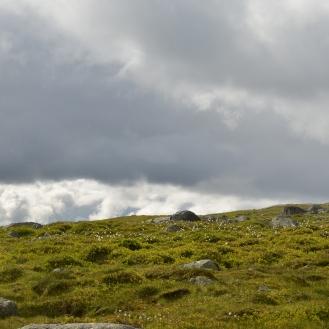 0589 Børgefjell