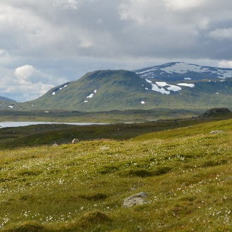 0592 Børgefjell