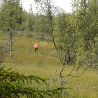 0710 Blåfjella-Skjækerfjella nasjonalpark