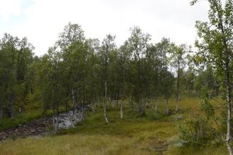 0716 Blåfjella-Skjækerfjella nasjonalpark