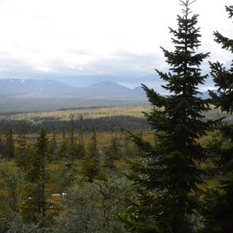 0719 Blåfjella-Skjækerfjella nasjonalpark
