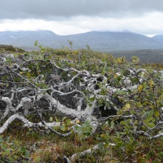 0721 Blåfjella-Skjækerfjella nasjonalpark